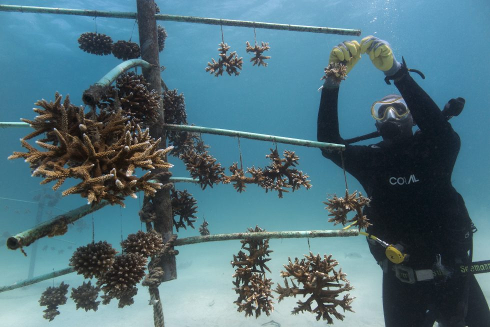 """Letting you know about @ICRI_Coral_Reef and @UNEP  """"Coral Reef Restoration as a Strategy to Improve Ecosystem Services: A Guide to Coral Restoration Methods"""".  #generationrestoration  #forcoral  A report on current methods, knowledge and recommendations."""