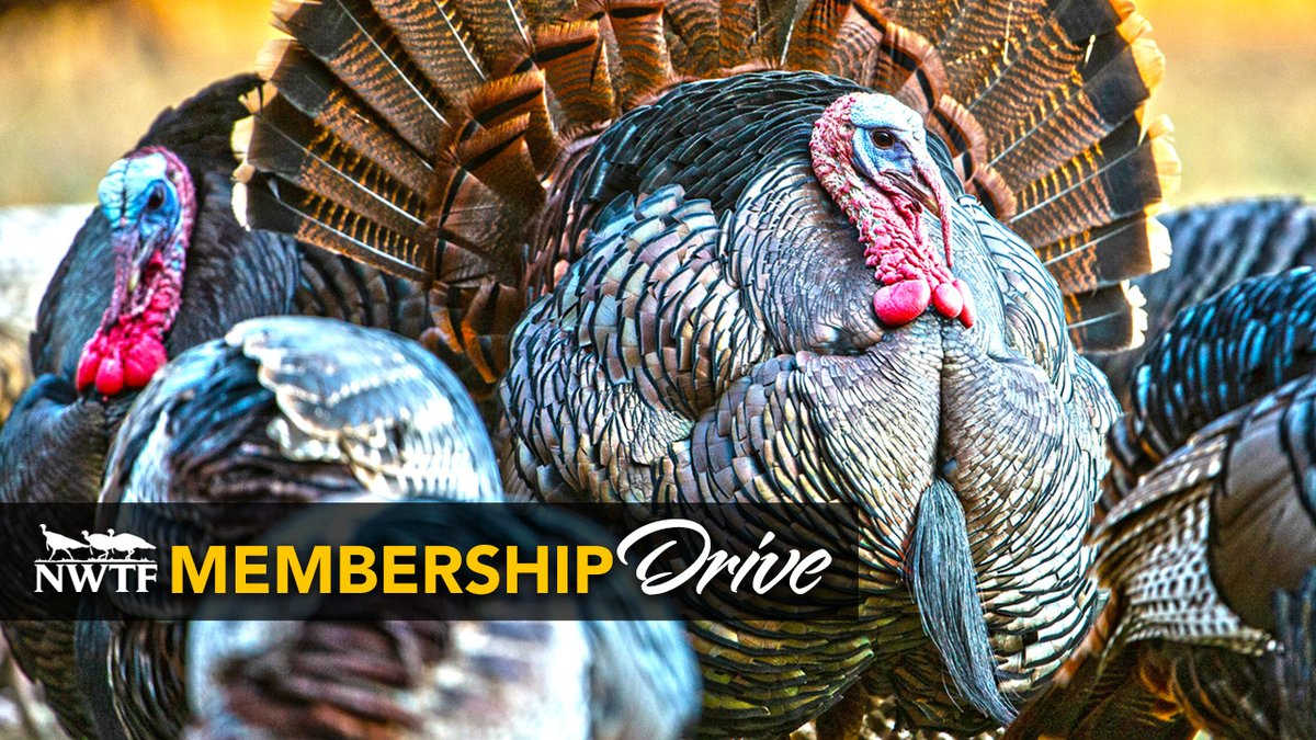 Help support #conservation as well as your local chapter by purchasing a NWTF membership. Members will receive a $25 Bass Pro Shops Promo Card as well as exclusive membership benefits!   Join our flock today:
