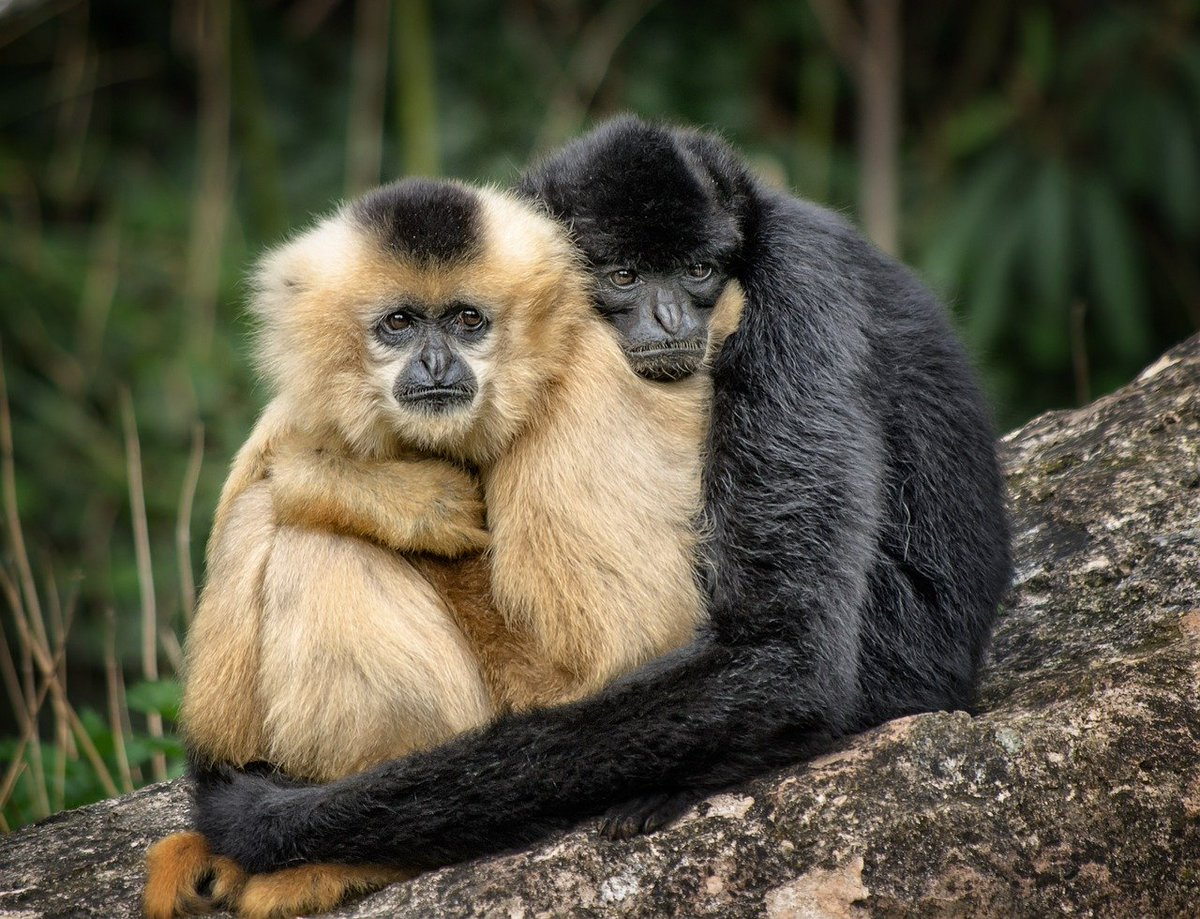 #NationalHuggingDay  Hugging has many benefits for our health. Different studies prove that hugging helps build a good immune system and decrease risk of heart disease, lower blood pressure and trigger the release of healthy hormones.  #hugsomeone #hugs  #hugday #huggingday