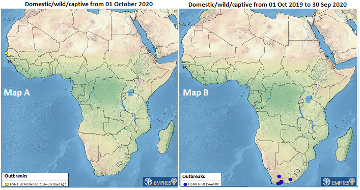 🚨 #ReadingNow 🚨 | @FAO situation update on Sub-Saharan Africa #HPAI recently released (20 January 2020).   🐔🐔    #avianinfluenza #animalhealth #animaldiseases