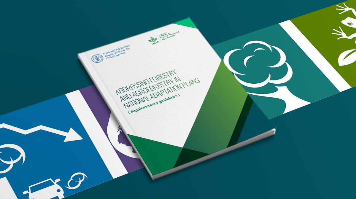 Addressing Forestry and #Agroforestry in National Adaptation Plans - read this #IKI report by @FAO ➡️  #climatehangemitigation #GenerationRestoration