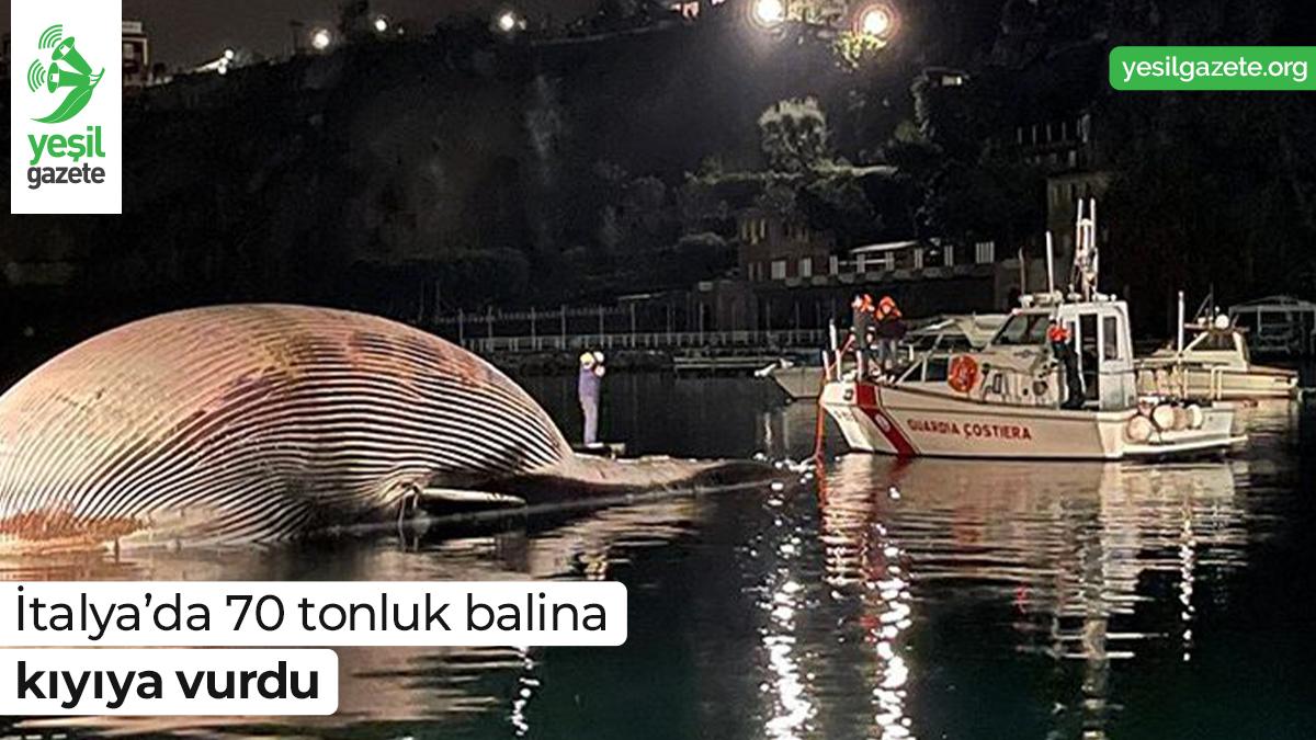 Napoli kentinde incelemeye alınacak dev balinanın ölüm nedeninin viral bir hastalık olabileceğinden şüpheleniliyor.  Ayrıntılar: https://t.co/oReTdrMbOm  #yeşilgazete #hayvanhakları https://t.co/FB43nvK0wS