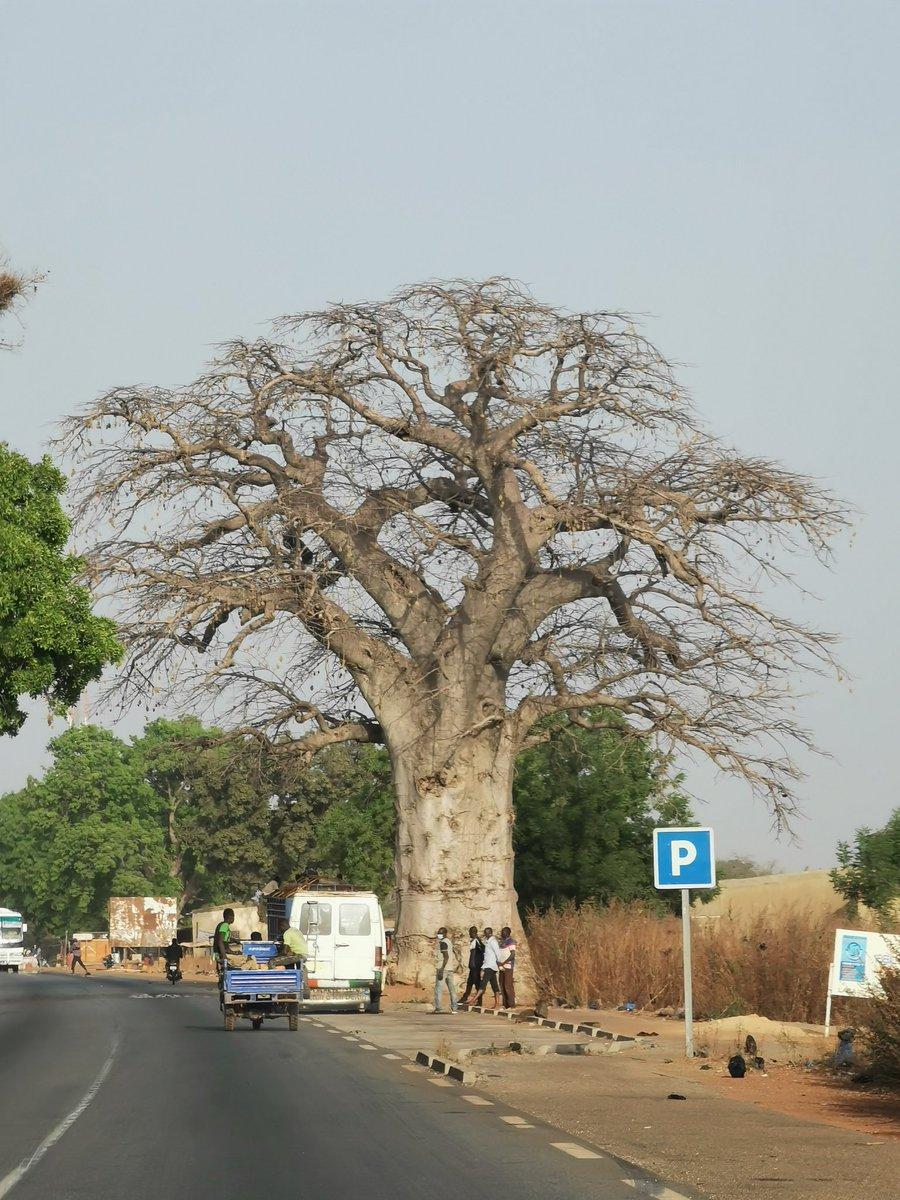 #BurkinaFaso Le baobab de Laba. #nofilter