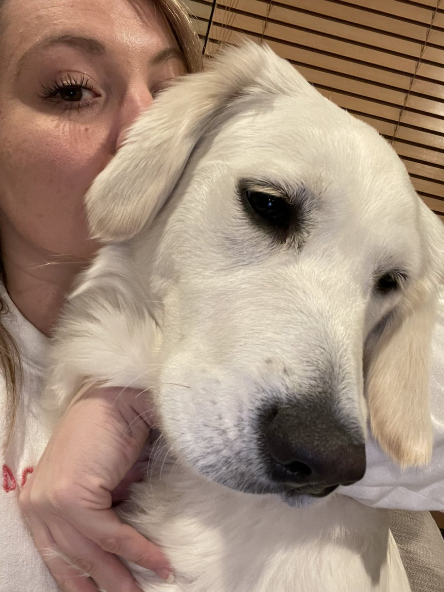 Mom and I have trouble with selfies😂 reply with your selfie! #selfie #puppy #GoldenRetrievers #puppyproblems #silly