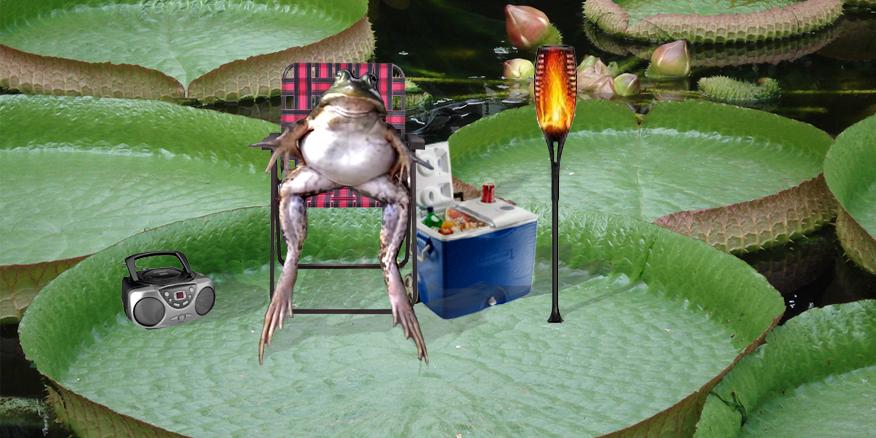 frogs day off #thursdayvibes #ThursdayThoughts #thursdaymorning