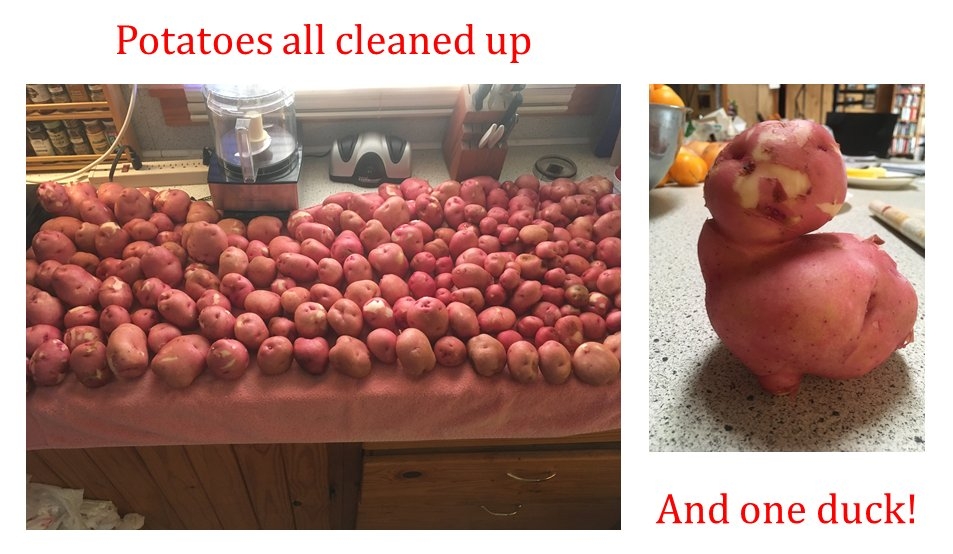 """#IAN1 #AMG #SFFBC #IARTG 🤠 A glimpse into my swamp life. Potatoes clean and drying. Found a duck in the bunch. Want the real stories? >> 😲 """"Tales From the Riverside"""" New Apple Book Awards - 1st Place Texas Authors Book Awards - 1st Place 😷"""