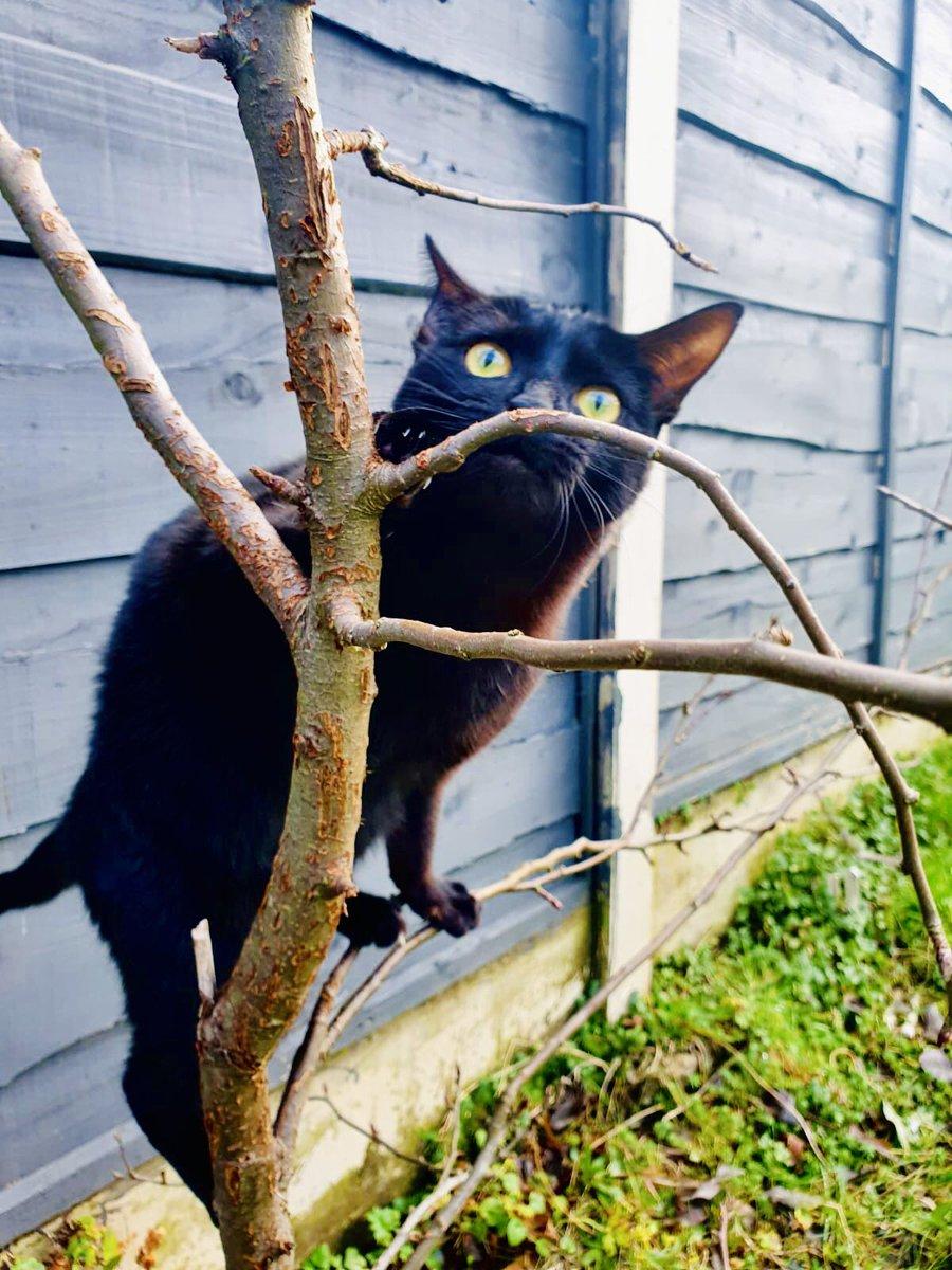 Shmells... sticky...  . . . #CatsOfTwitter #CatsOfInstagram #AdoptDontShop #FluffyFursday #ThursdayThoughts #BlackCats @RSPCA_official @CatsProtection