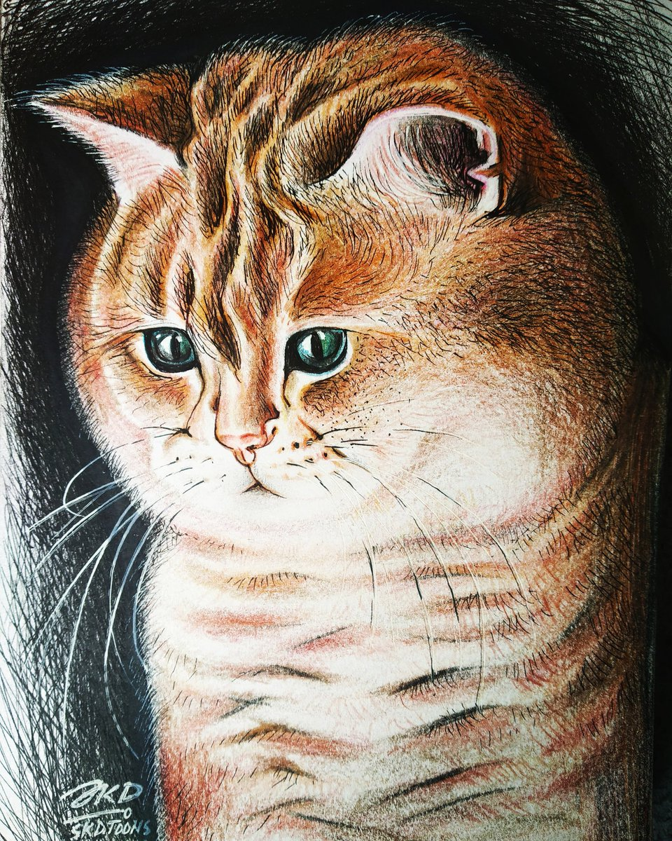 A birthday gift - Cat drawing with color pencils.   Drawing video link:   #sketch #drawing #cat #meow #catdrawing #catpainting #skdtoons #skdpaintings