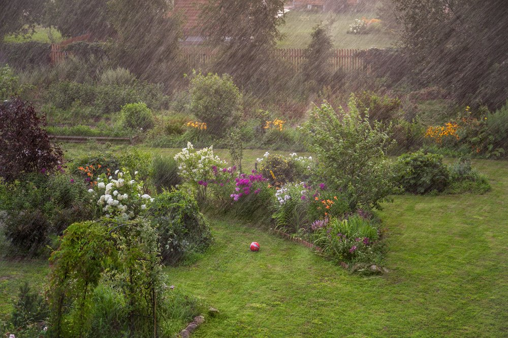 RT from TEGmagazine January has been a real washout so far. But help is at hand with some bright advice on wet weather gardening from these top gardeners.           #gardening #StormChristoph #rain