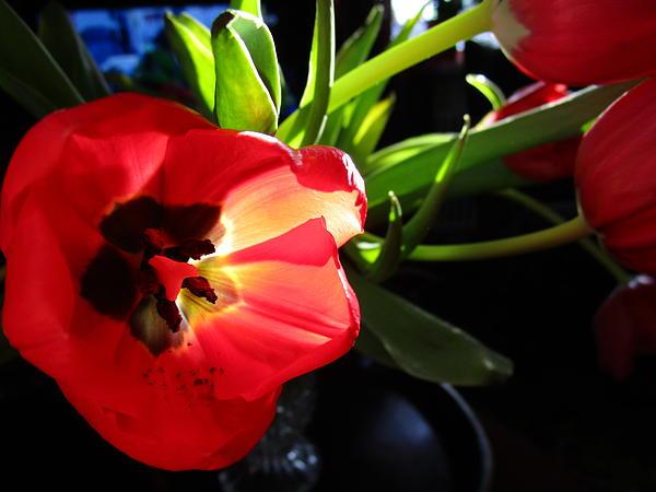 "Replying to @larssonzita: New artwork for sale! - ""Tulip Mania 4"" -  @shoppixels"