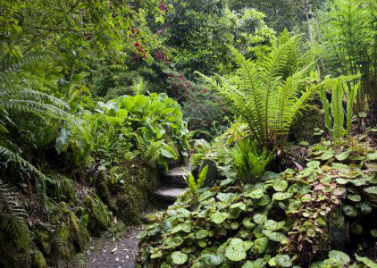 RT from TEGmagazine Ferneries came into fashion in the 1830s, when Britain became gripped with pteridomania or 'fern fever'. Learn more:       #SaturdayThoughts #garden