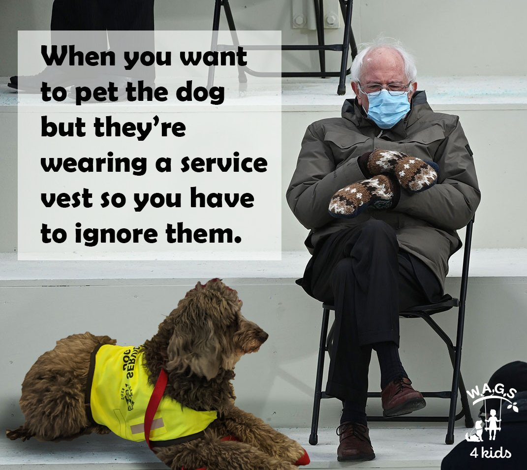 #BernieSanders #berniemittens #BernieSandersmemes #thursdaymorning #servicedogs