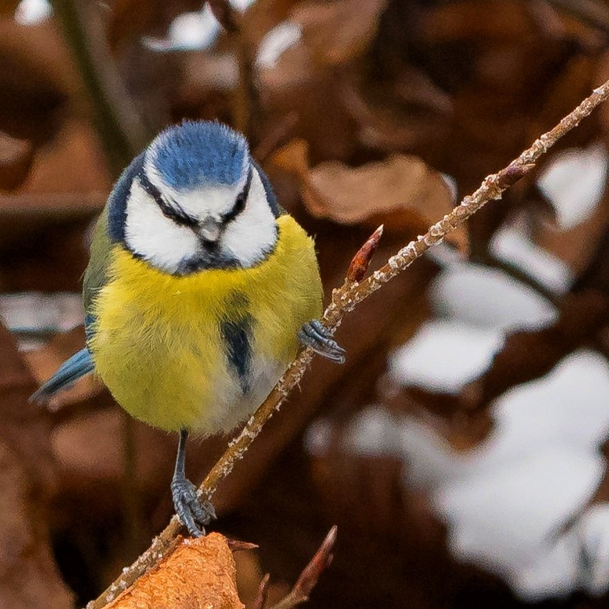 #bird #nature #birds #homewitholympus #omd #naturephotography #wildlife #wildlifephotography #photography #birdphotography #birdwatching #birding  #naturelovers #animal #photooftheday #bestbirdshots #birdlovers #rspb  #instagood #bird_brilliance