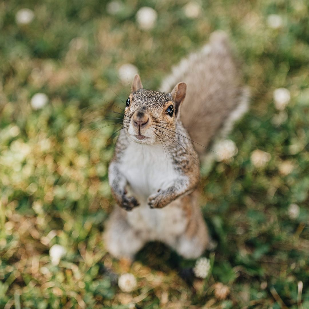 It's National Squirrel Appreciation Day! This day is dedicated to the backyard squirrels and the look they give you when your bird feeder is empty. We all know that look. #AtwoodsRanchAndHome #SquirrelAppreciationDay #Squirrels #SquirrelLove #SquirrelLife #NatureLovers #Wildlife