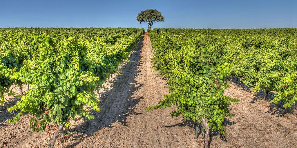 Uno de los vinos más prestigiosos de #España es el de Denominación de Origen #Rueda🍷. Su zona de producción se localiza en la provincia de #Valladolid, limitando con #Segovia y #Ávila. ¡Qué placer brindar con ellos!😎  👉   @CyLesvida @rutasvinoespana