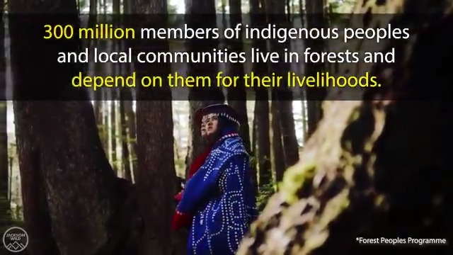300 million members of indigenous peoples and local communities live in #forests and depend on them for their livelihoods.   Learn more about our #WorldWildlifeDay Film Showcase with @JacksonWild and @CITES and apply to be a showcase judge ➡️