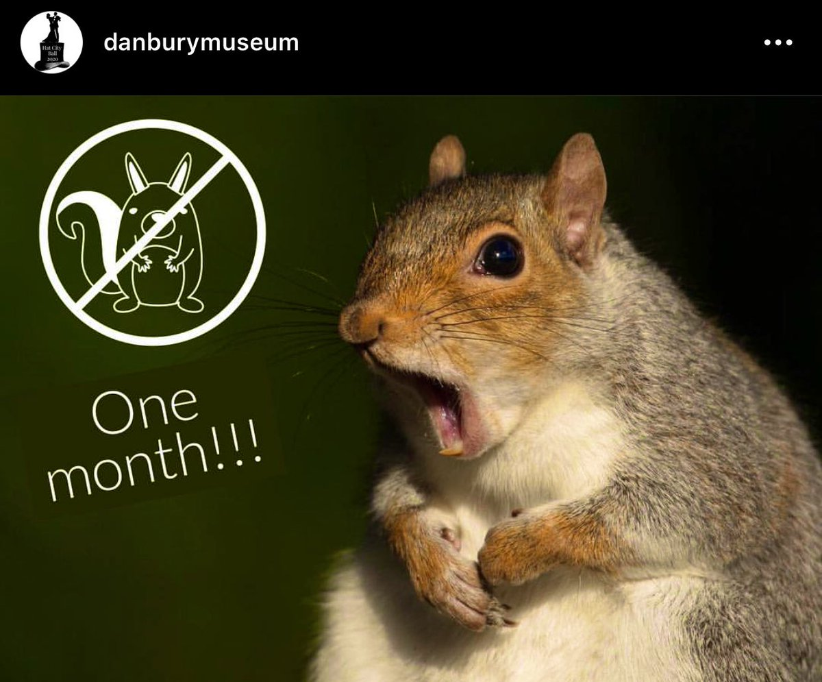 Before we adjourn for the day, we'd be remiss not to shout out our Sciuridae friends on #NationalSquirrelAppreciationDay.  We appreciate them so very much more when they stay *outside* of our historic buildings. (The attached was to celebrate a month squirrel free in 2018.)