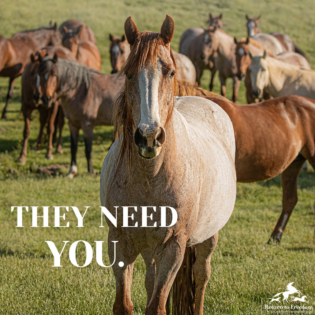 We still need you in the fight to protect wild mares! … #horses #wildhorses