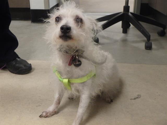 RT @LADogsForYou: I'm Cally, a senior female #MixedBreed in Van Nuys, CA. 50336211 https://t.co/FyEGEj9Kbf https://t.co/wQT00mGsn6