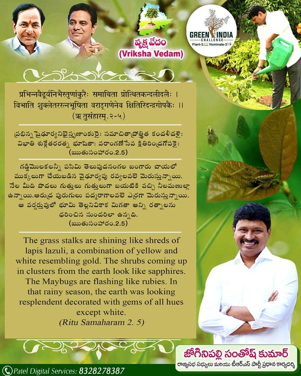 #vrikshavedam #greenindiachallenge  @MPsantoshtrs @raghavtrs @purushothamtrs @JAGANTRS