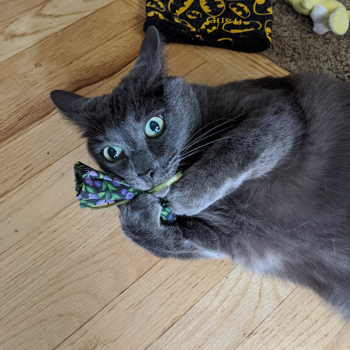 #WhiteHouseCatWatch Short Boris is having some medicinal catnip and watching!