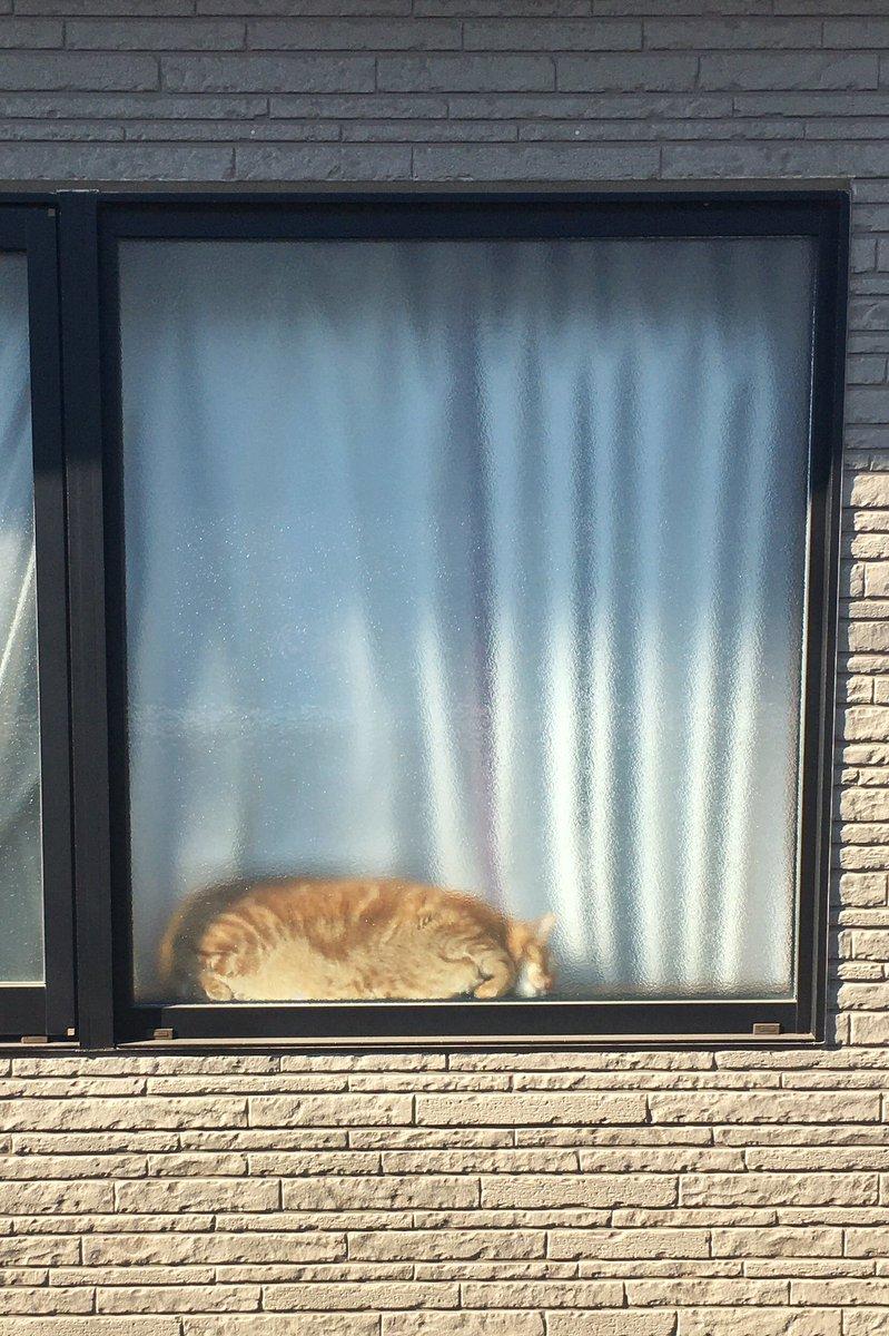 日光を吸収中の猫さん https://t.co/077yhVRtrv