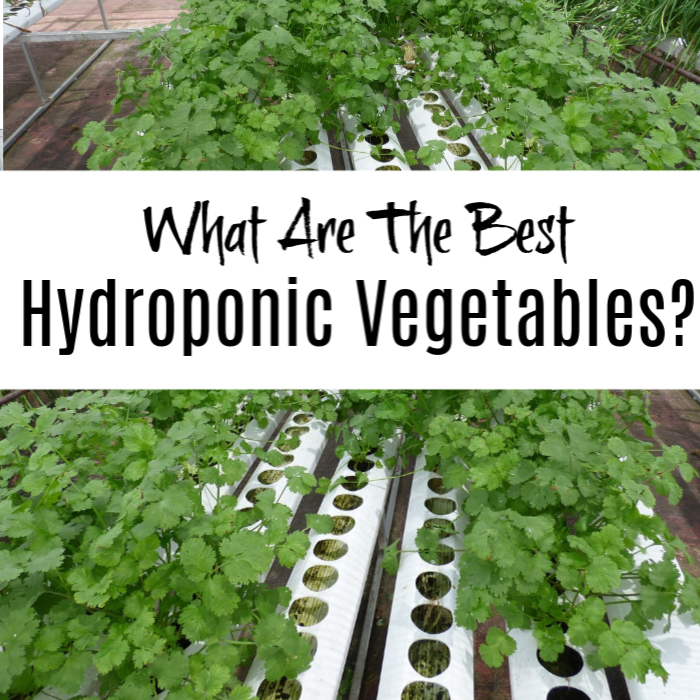 What Are The Best Hydroponic Vegetables?    #hydroponics #gardening #gardens hydrogardening #gardenlife #gardener #plant #greenthumb #homegardening #gardeningtime #gardeningphoto