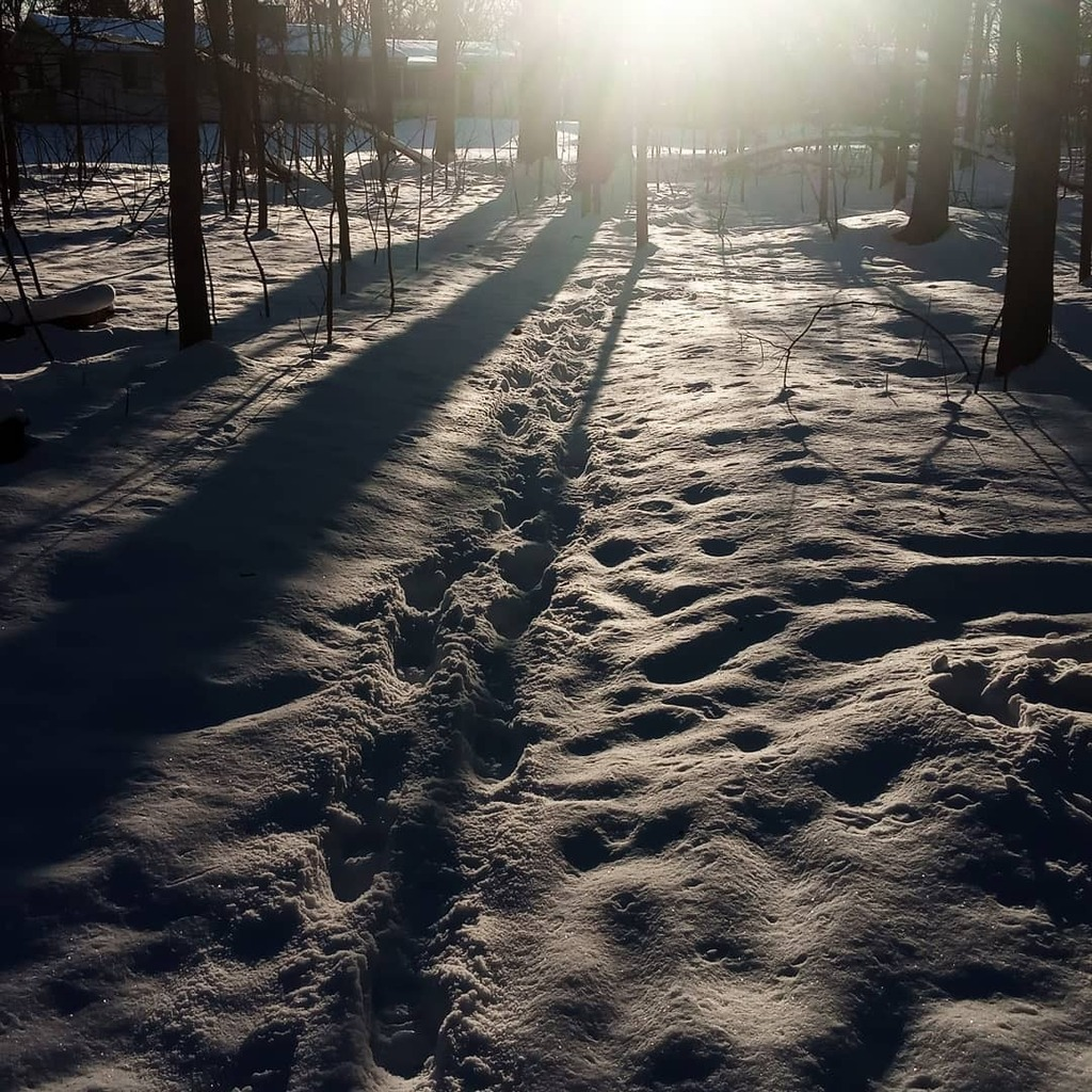 Walk in the snow.  #woods #snow #nature #beautiful #naturephotograpy #photography