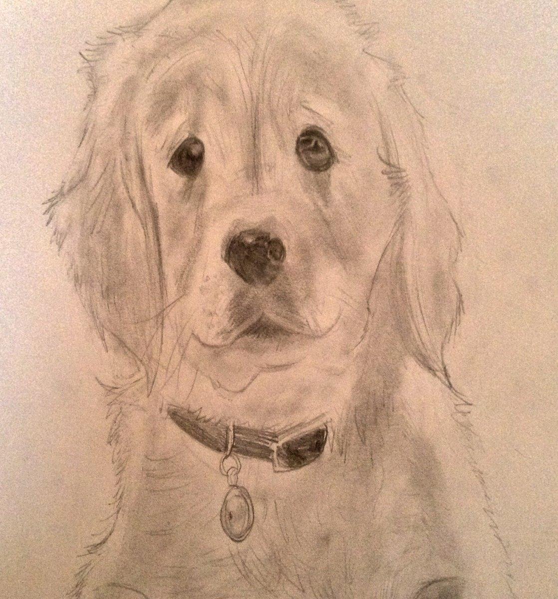 Golden Retriever puppy drawing.  #puppylove #puppy #GoldenRetriever #cute #Artworks #dog #canine #pencilart
