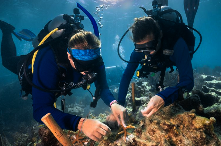 .@NOAA and partners have developed a bold mission to restore seven ecologically and culturally significant coral reefs within @FloridaKeysNMS through Mission Iconic Reefs. Read more about this restoration initiative here! #OceanDecade #GenerationRestoration