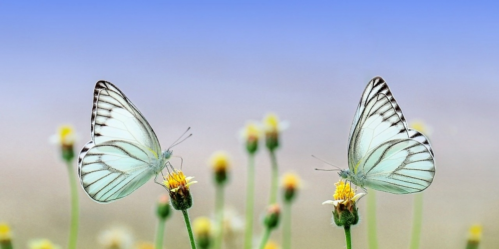 Just look, that`s outstanding! #butterfly #insect #macro
