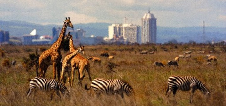 Tour to the national park during the ASPM training. #Nationalpark #Tour #Nairobi #Mombasa