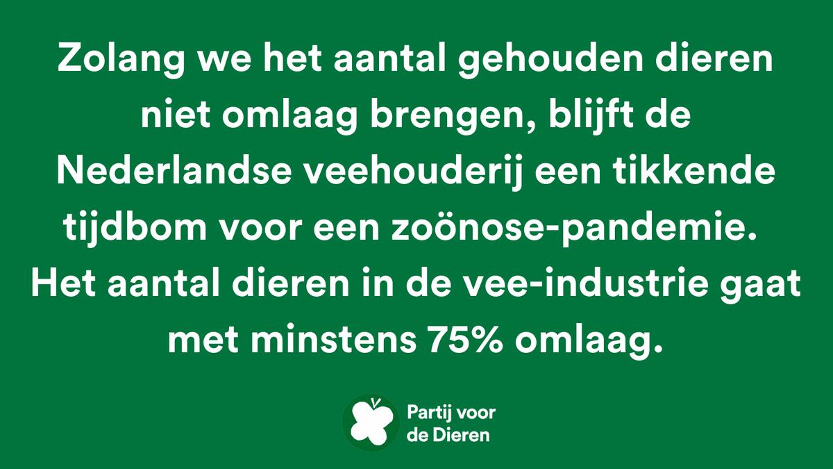 250 redenen om #PvdD te stemmen 💚 - nr. 63. #PlanB #TK2021   Zolang we het aantal gehouden dieren niet omlaag brengen, blijft de Nederlandse veehouderij een tikkende tijdbom voor een zoönose-pandemie. 👉 Het aantal dieren in de vee-industrie gaat met minstens 75% omlaag.
