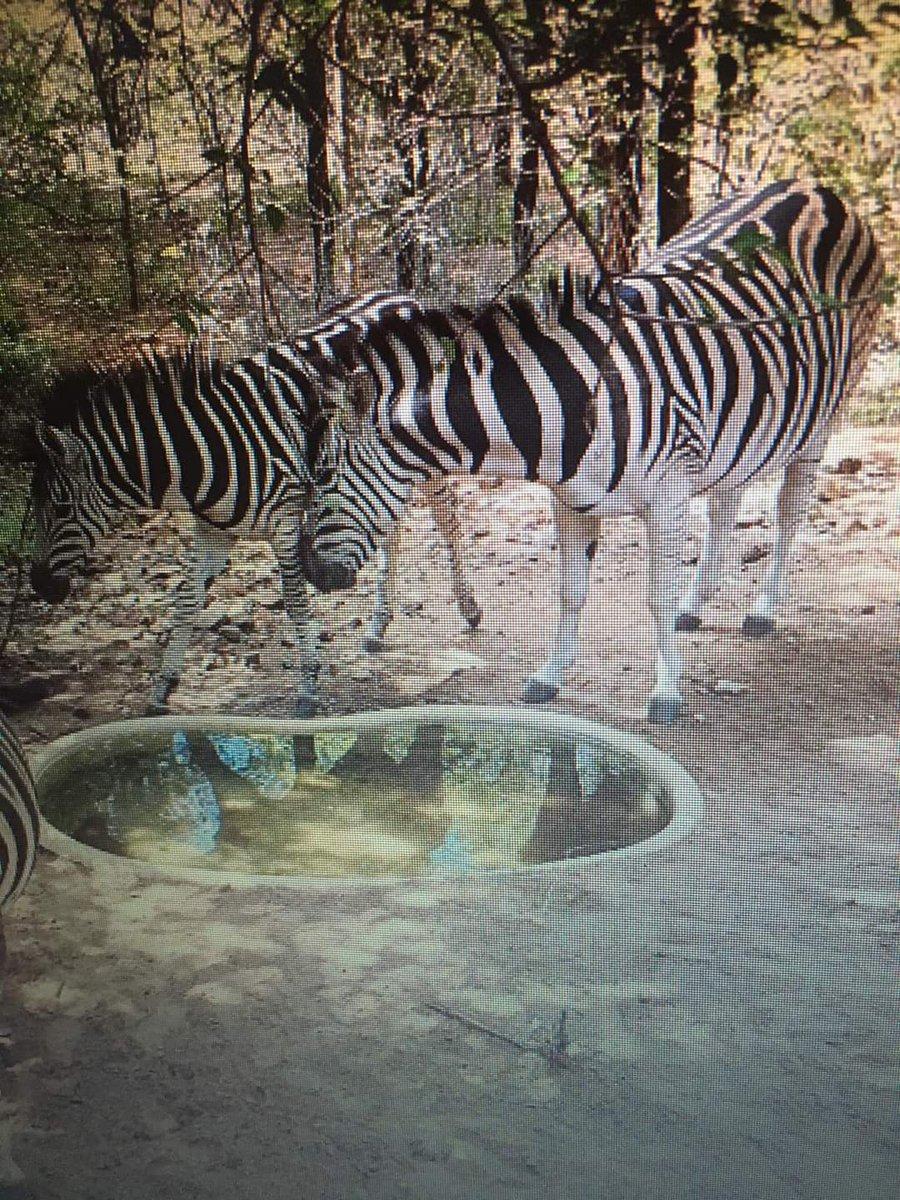 #weekend #special! #Bushveld #Holiday #home #accommodation #getaway #Jacuzzi R900/n #Hiking #Cycling #wild #animals #children #cycle #play #safe #place #accommodation #wegbreek #PRIVATE #Self #Cater #Giraffe Kudu Zebra Warthog #4x4  #Waterberg  0826774227