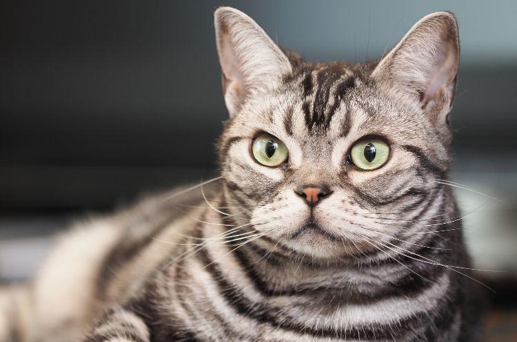「猫の名前ランキング2020」発表!「ムギ」ちゃんがランクアップで首位獲得