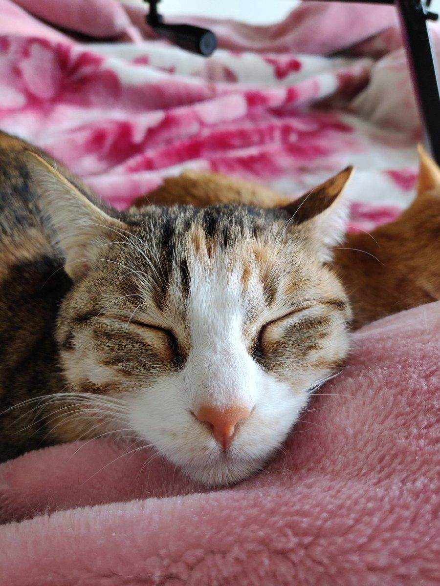 Sukoon.  #CatsOfTwitter #cats #AdoptDontShop