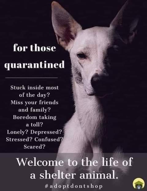 Here's a thought to think 🐾 #AdoptDontShop #FridayThoughts