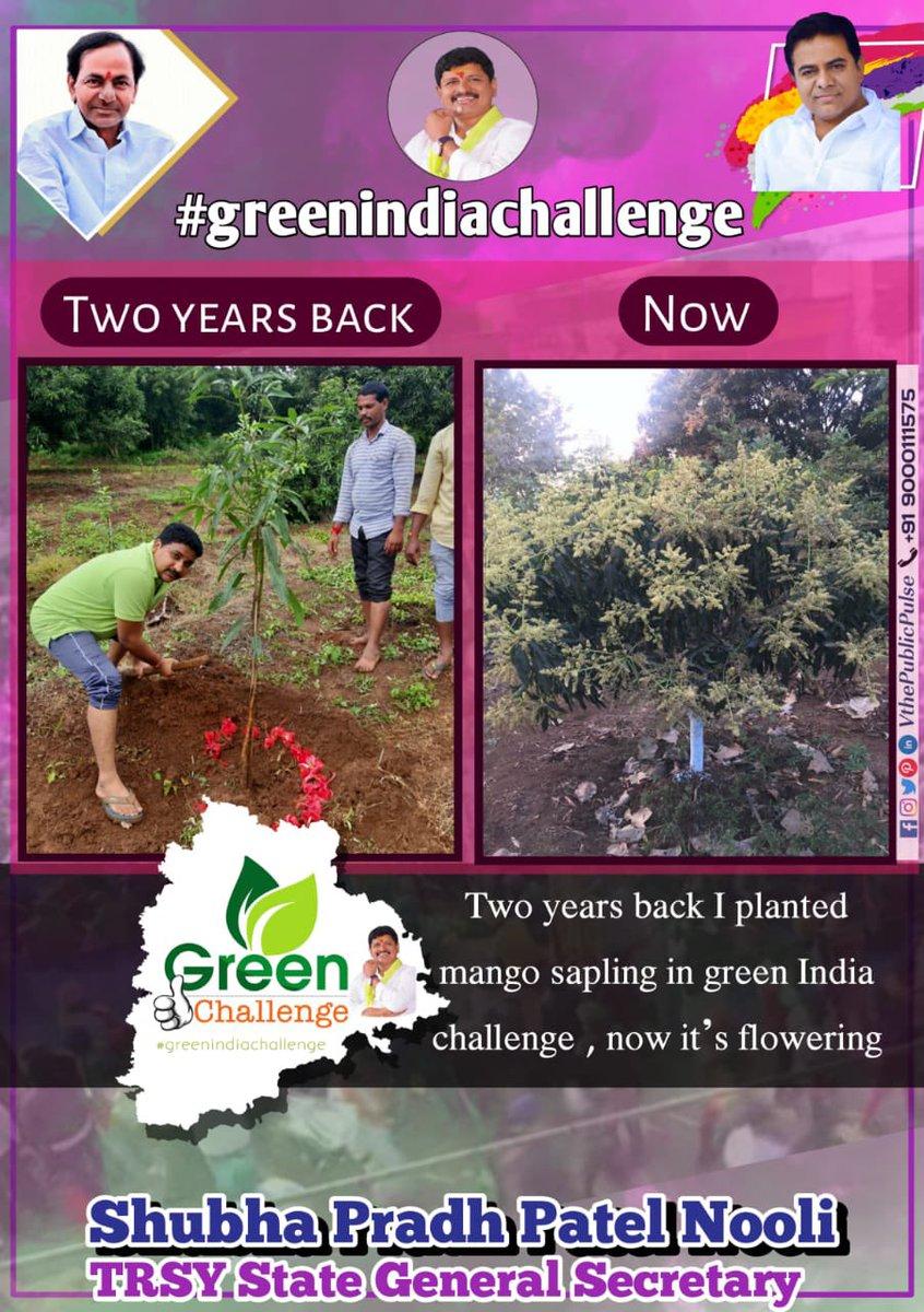 Great Initiative by Beloved @MPsantoshtrs Annagaru #greenindiachallenge me planted a Mango Sapling 2yrs back now it's flowering 👇