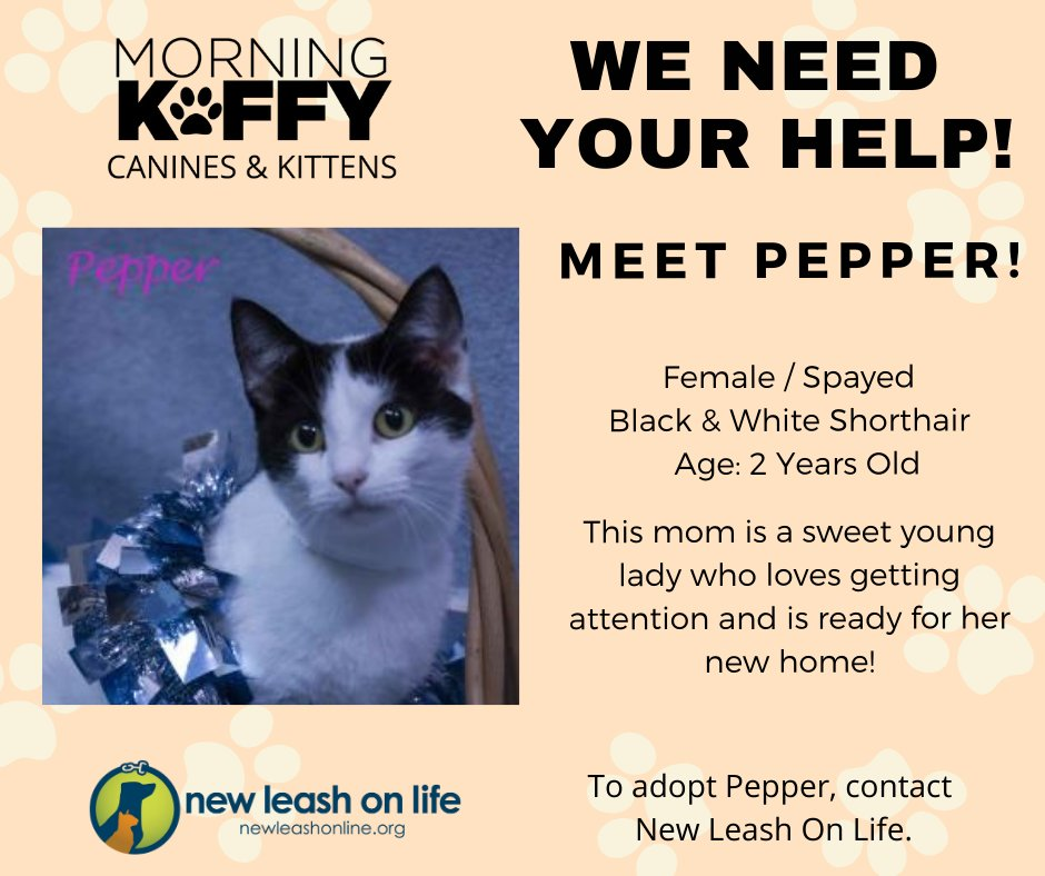 Meet Pepper! We're looking to find Pepper's furrever home with @morningkoffy's Koffy's Canines & Kittens. Pepper is available for adoption through @newleashonline. #KoffysCaninesKittens #PetAdoption #newleashtn #adoptdontshop