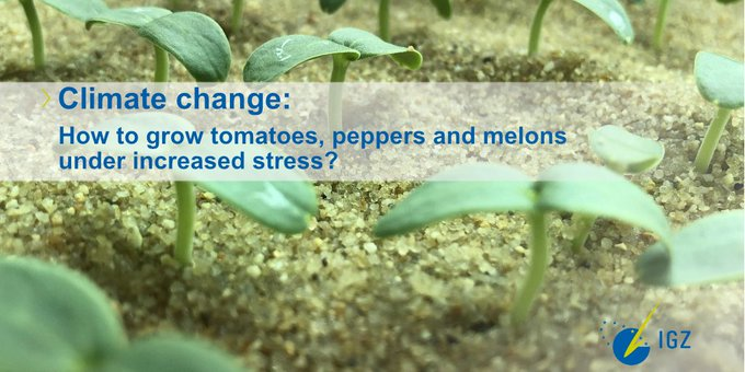 The goal of @vegadapt is to contribute to adaptation of vegetable crops to single and multiple stresses induced by #ClimateChange in the Mediterranean area.➡️