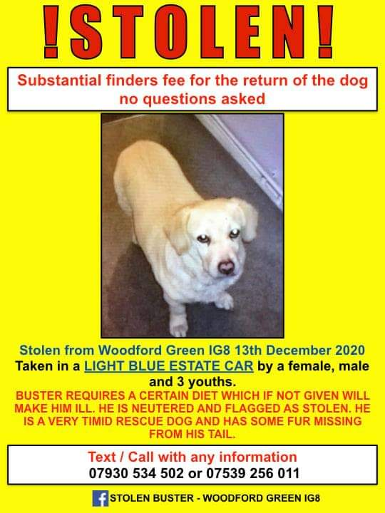🆘 STOLEN dog from pensioner. She is heartbroken 💔 Have you seen Buster? PLEASE retweet. ⬇️  @DoglostUK  @KarenFi51820768  @AnthonyHorowitz  @rewildingeurope @dog_feelings @dog_rates @Firefly070 New Look #ItsASin #love #beautiful #nature #photooftheday
