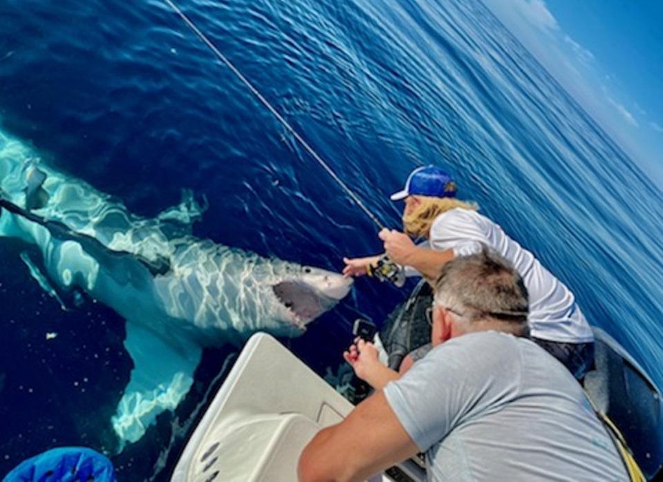 Fishing boat captain pets great white shark off Pinellas coast https://t.co/PQcMy82x0F https://t.co/MvTDrb2tlh
