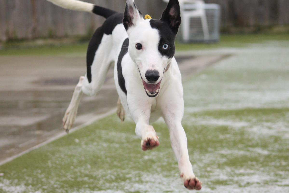 We thought Nickel's happy face might be just the thing you needed to see today 🐶💛  Along with the great news that he's found a forever home 🏡 Happy Friday! @DT_Evesham