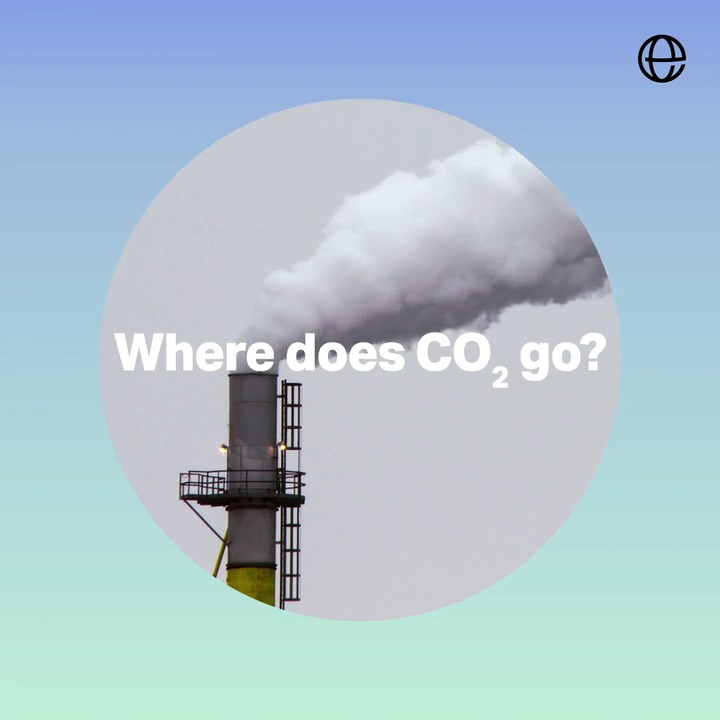 The planet's natural carbon sinks, like forests and oceans, are vital for keeping the level of harmful CO2 in the atmosphere down, and Earth's temperature from increasing. But our actions are making it harder for carbon sinks to do their job. That's why we work to protect them.
