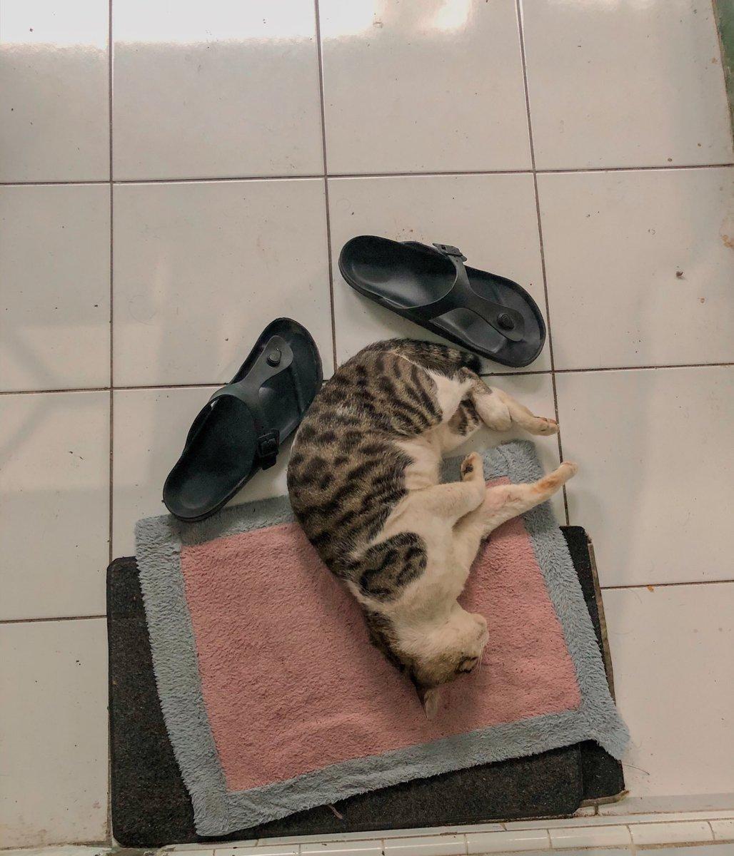 Kucing dan pose tidurnya yang sulit dimengerti.