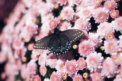 Photo By Kendall Scott | Unsplash - via @Crowdfire    #insect #mums #ohiostatebuckeyes #refer #organicproducts