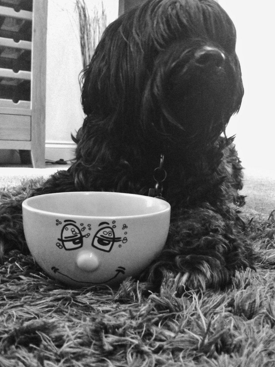 Happy Smiley 😘 Friday friends  #coffeebreak #fridaymorning ☀️#dogcelebration  💚