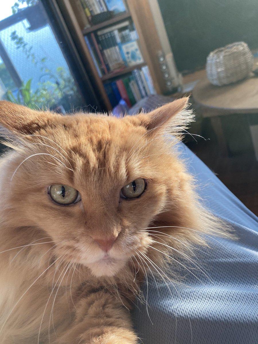 写真を一緒に撮るなら猫!いつの時代だって猫は可愛い
