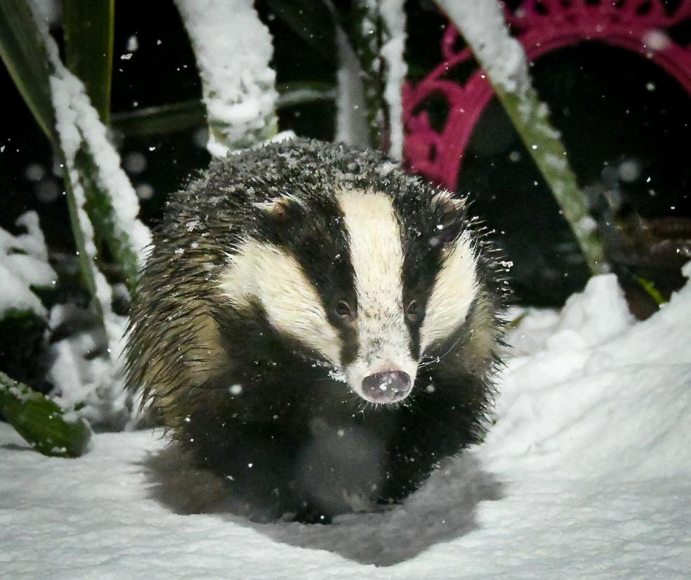 I have no words Mike has done it again, the most beautiful Mrs Lumpy in the snow, that's next years Christmas cards image sorted 😍🐾🐾❤️