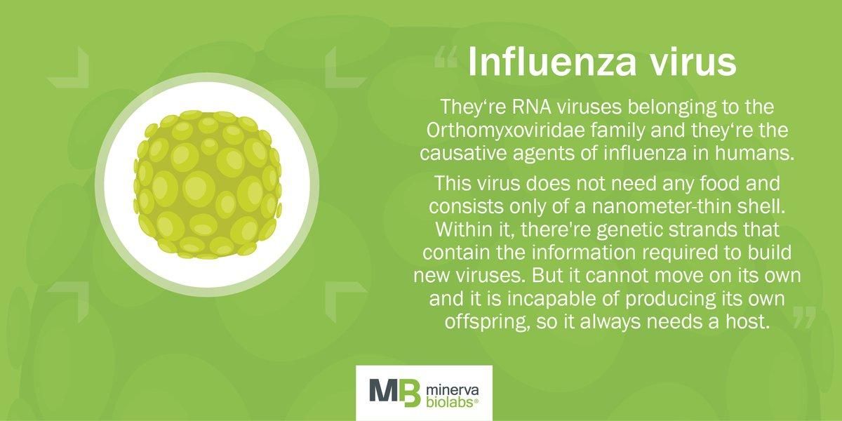 #Influenzavirus: a d